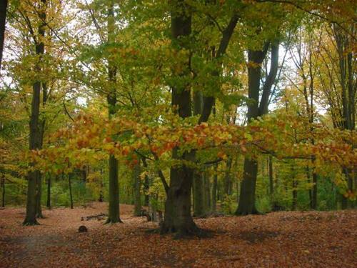 Buchenwald im Herbst © Astrologin Bärbel Zöller
